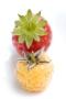 cp28-fraiseframboiseblanche2